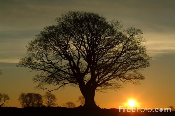 15_30_47-sunrise-northumberland_web