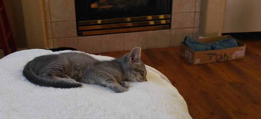 Our newest family member Toby sleeping...Again.