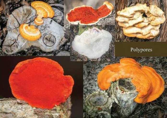 Fungi Fungus Queensland Bribie island plants flora