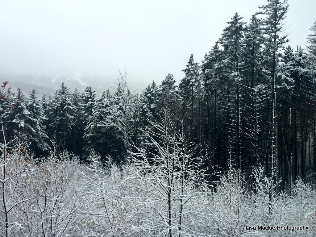 Thanksgiving_snowy_forest