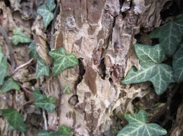 Interesting Ivy and Bark Textures