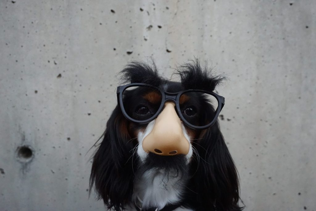 Image by Braydon Anderson of black and white dog in disguise