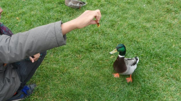 Tame duck or lame duck!