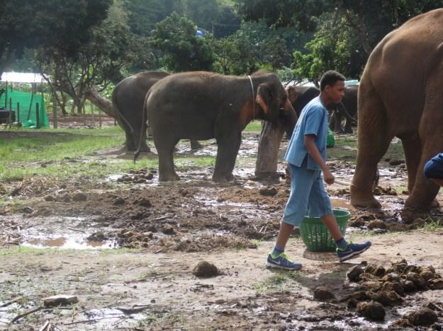 Mud and poo at Baanchang Elephant Park!