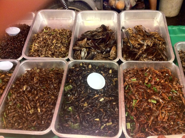Crunchy insects at the Sunday Night Market and No, I just couldn't do it!