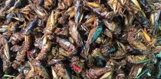 Insect food in Cambodia