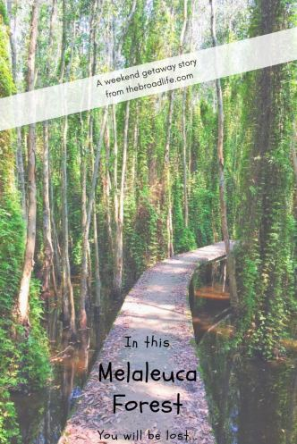 Get Lost in Melaleuca Forest - The Broad Life - Pinterest board