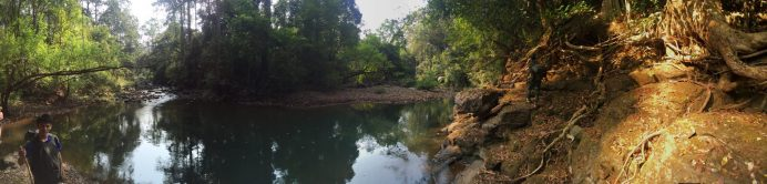 Panorama view taken in the jungle