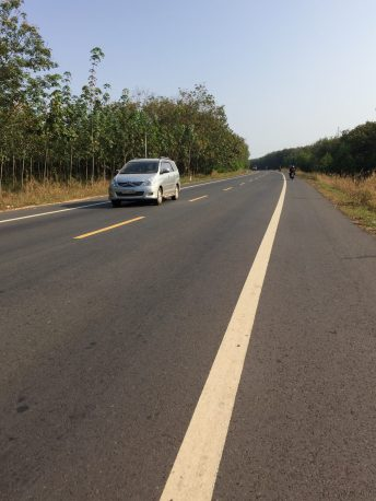 At Binh Phuoc province, on the way to Bu Gia Map town. Rubber trees alongside the road