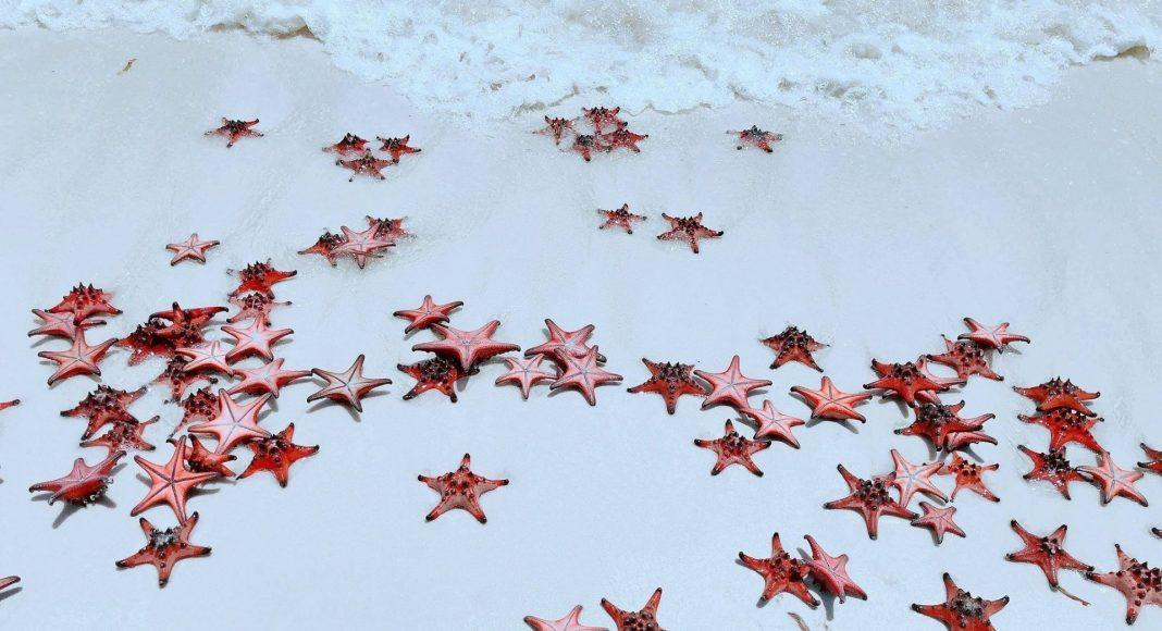 Red Stars at Rach Vem Beach, Phu Quoc Island, Vietnam