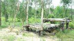 Lions in Vinpearl Safari, Phu Quoc Island, Vietnam