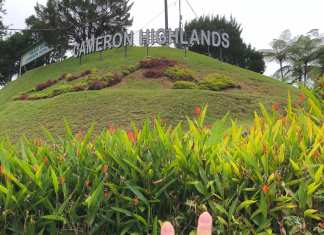 the word Cameron Highlands at Tanah Rata