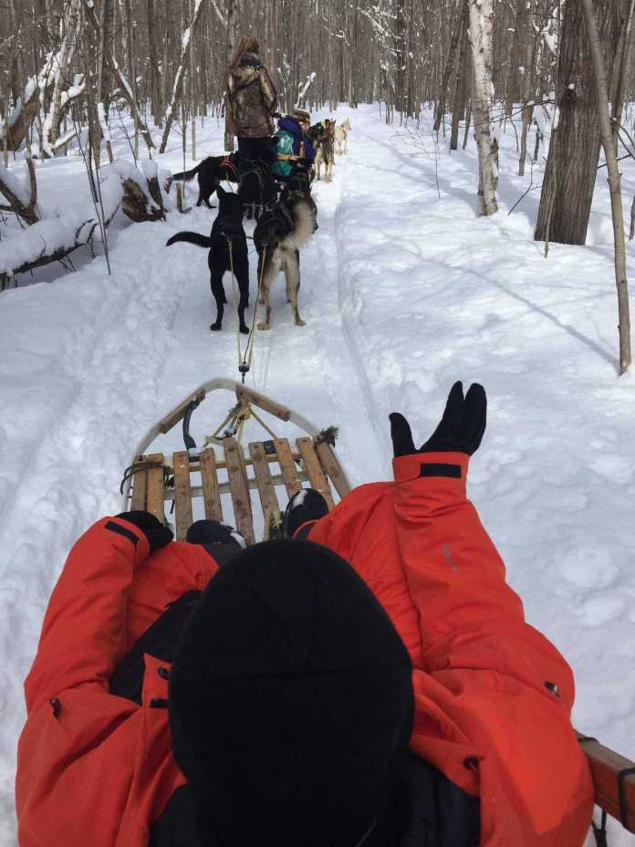 Playing dogsledding in Moonstone, ON, Canada
