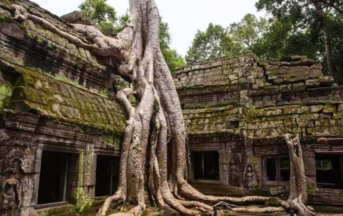 one of the Angkor Wat facts: the ancient tree roots wrapped around a part of Angkor Wat