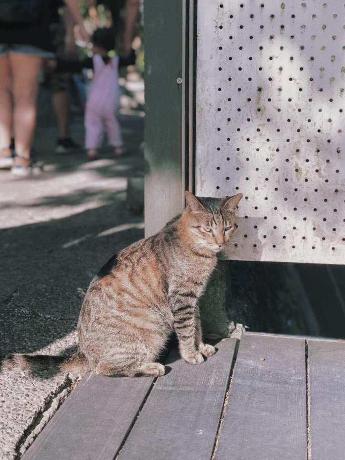 Cat at the Cat Village