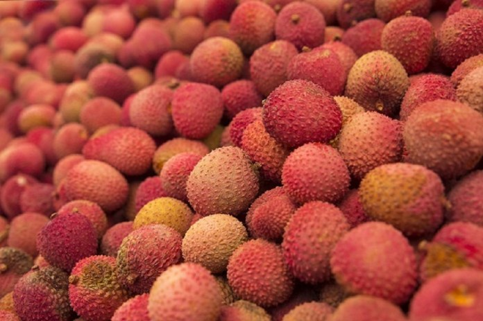 lychee vietnam fruit