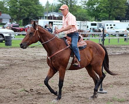 horse senior