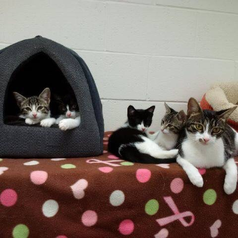 Right meow could be the purrfect time to expand your family
