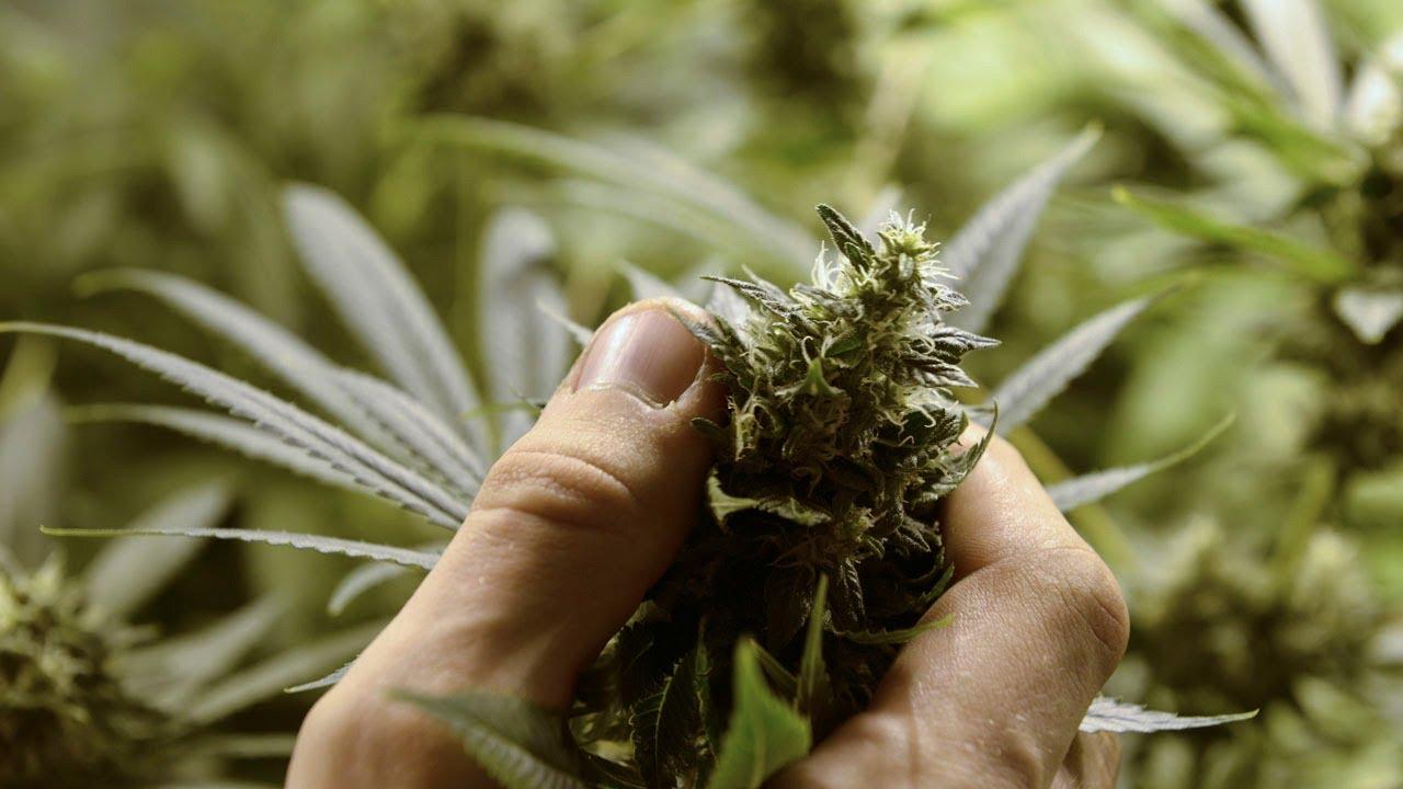 Durham Region considering surtax on legalized marijuana
