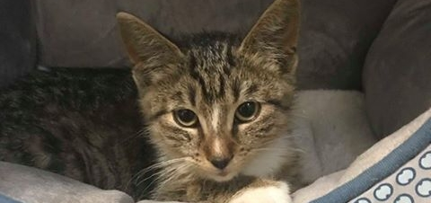 Kitten reportedly thrown into traffic receives second chance at life