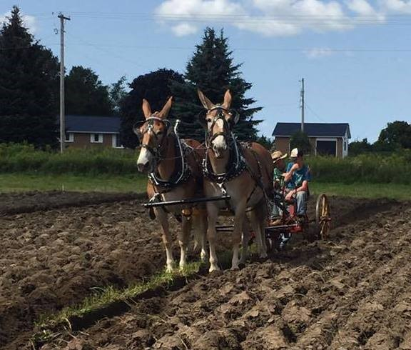 Durham plowing match returns to Brock Township this weekend