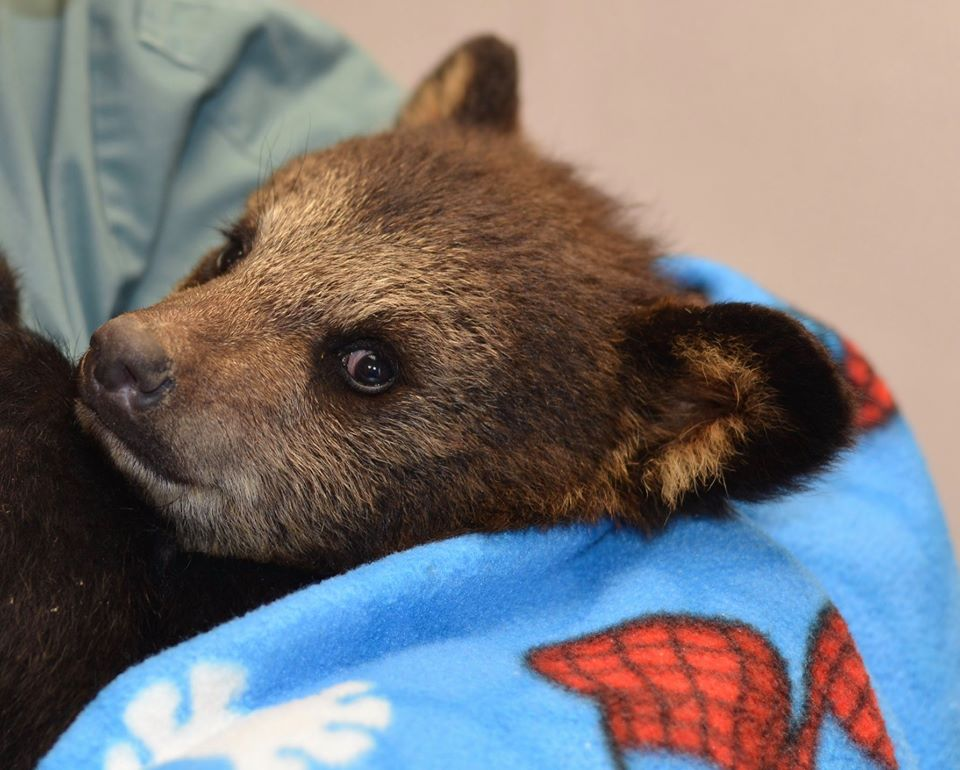 Orphaned bear cub finds new home at wildlife sanctuary