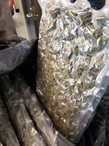 cannabis opp 3
