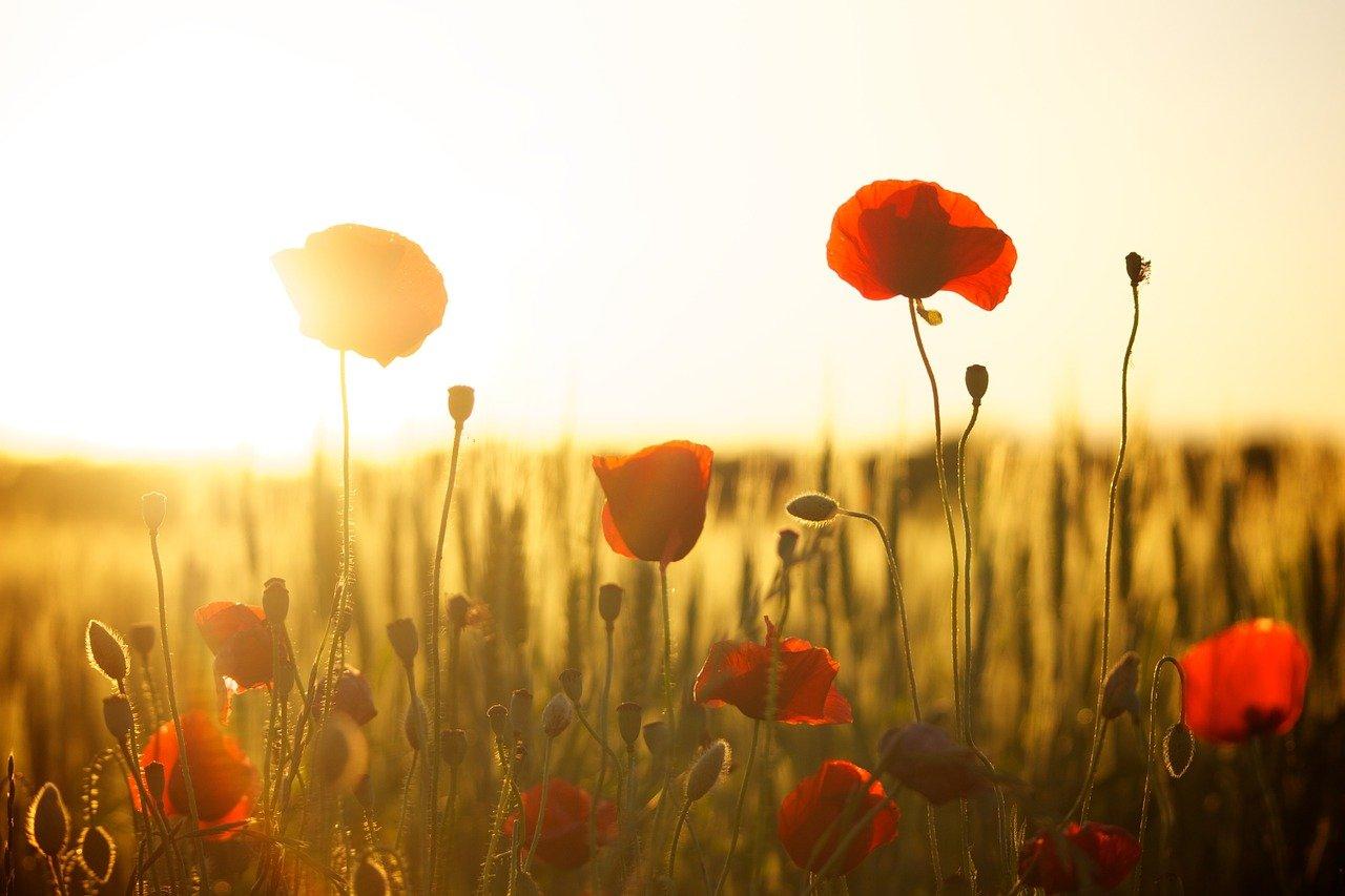 Ten quick facts on 'In Flanders Fields'
