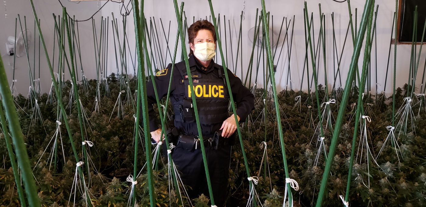 Two charged after police seize nearly 2,500 cannabis plants