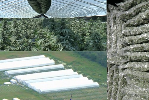Two charged in relation to cannabis grow operation in Beaverton