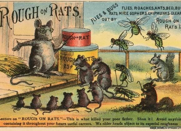 A War on Rats! Bubonic Plague: A Centenary Study