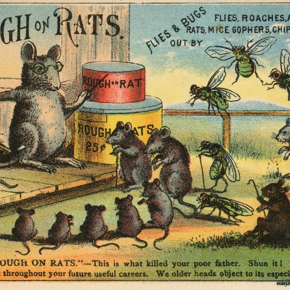 A War on Rats! Bubonic Plague: A Centenary Study