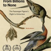 🐦 FILM SCREENING:  From Billions to None