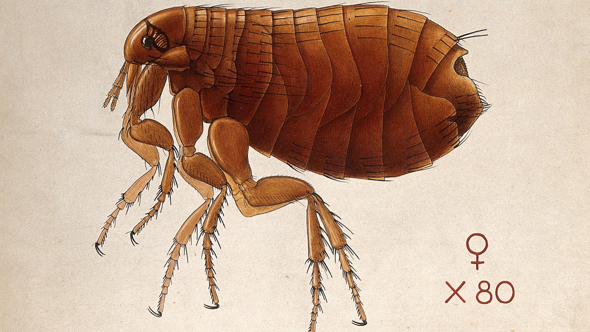 War on Rats! Bubonic Plague in Galveston: Causation - The ...