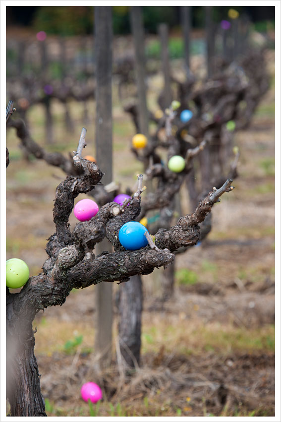 Vineyard Easter Egg Hunt - Francis Ford Coppola