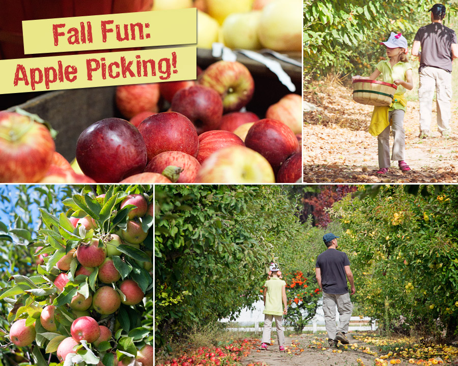 Fall is here…Time for apple picking
