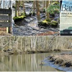 Barnes Woods Nature Preserve