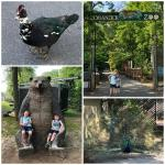 Cohanzick Zoo and Bridgeton Splash Park