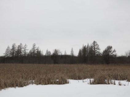 Tamarack Bog