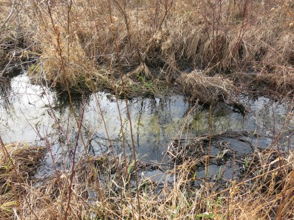 Joins the Scuppernong River