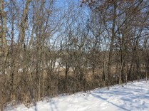 When the buckthorn leafs out, you can't see the wetland below