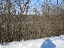 The wetlands north of the playground are barely visible through the buckthorn thicket