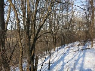 If it's an ugly tree, it's probably a buckthorn
