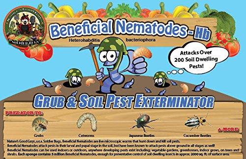 Bug Sales 25 Million Live Beneficial Nematodes Hb