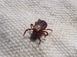 all-natural tick repellent for humans