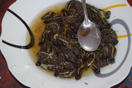 degustation of edible caterpillars called chiopas in peru by the bug trotters
