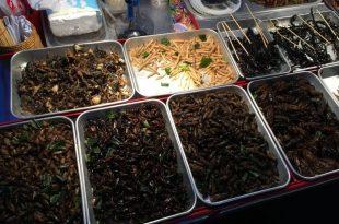 Mon opinion sur les insectes comestibles du marché de Bangkok en Thaïlande
