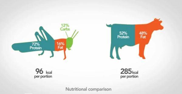 valeur nutritionnelle comparée des insectes et de la viande