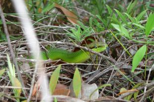 comment survivre dans la foret tropicale en mangeant des insectes
