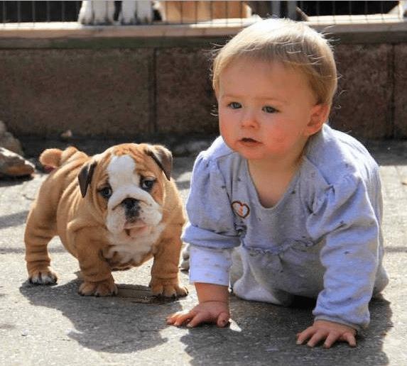 best baby companion